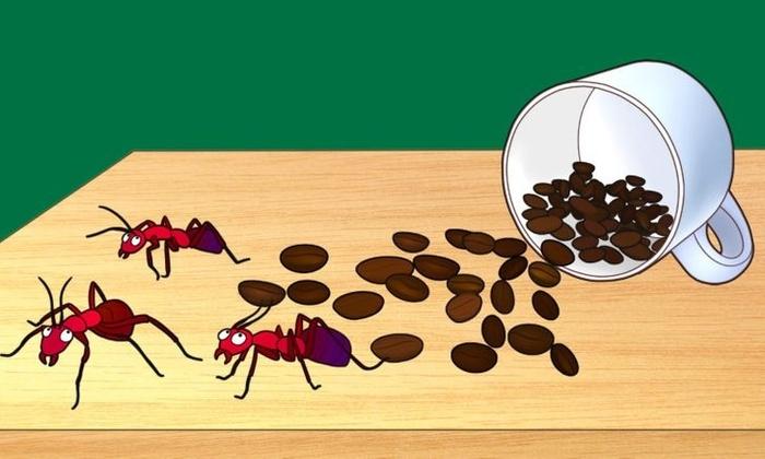 Bạn sẽ không còn vứt bỏ bã cà phê nếu biết được 6 công dụng siêu thú vị này của chúng