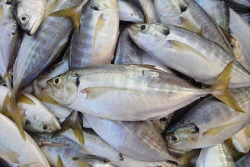 Cá biển không rán mà hấp theo kiểu này, ăn không một chút tanh còn thơm ngon ngất ngây