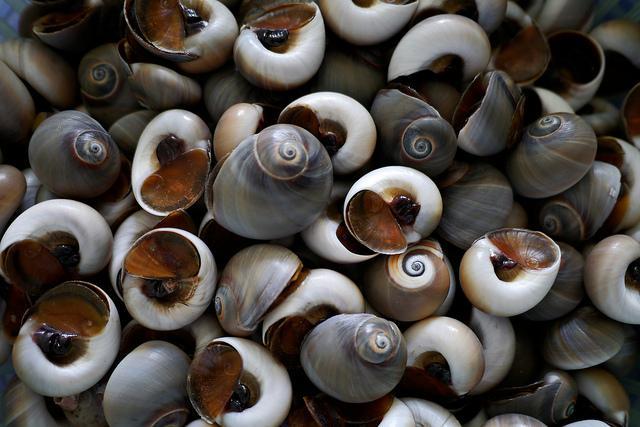 Cách làm sạch ốc, ngao, sò đơn giản không phải ai cũng biết