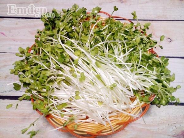 Cách làm salad rau mầm trộn thịt gà thanh mát, ngọt dịu