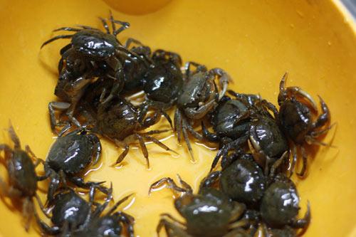 Đi chợ (09/08): Cua đồng, ếch ế sưng