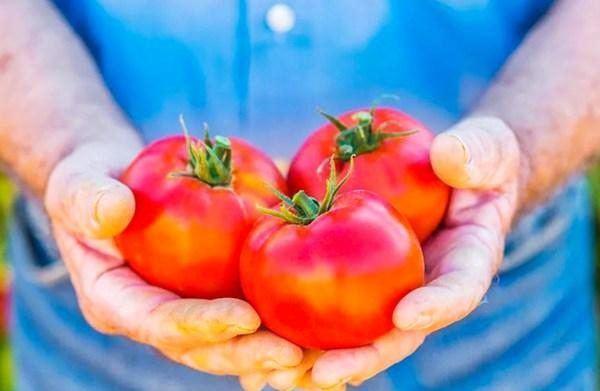 Mua cà chua đừng nắn bóp, hãy nhớ 5 điều này yên tâm chọn được quả ngon, chín tự nhiên
