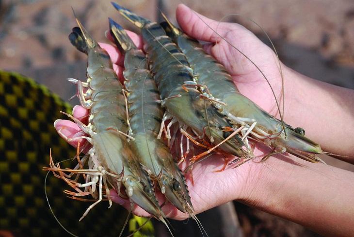Mùa hè đi biển thì phải thuộc nằm lòng các quy tắc chọn hải sản này để luôn được ăn tươi ngon