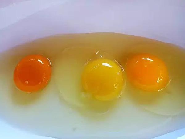 Nhìn 3 lòng đỏ này, bạn có biết quả trứng nào được sinh bởi con gà khỏe mạnh?