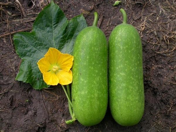 Những loại quả mà bấy lâu nay nhiều người lầm tưởng thuộc họ rau củ