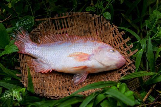 Rau dớn kho cá đồng: Món ăn dân dã quê nhà